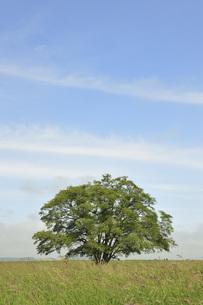 ハルニレの木の写真素材 [FYI00414446]