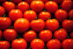 ベジタブル/トマト03の写真素材 [FYI00414580]