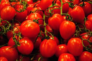 ベジタブル/トマト02の写真素材 [FYI00414591]