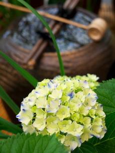 紫陽花と水瓶の素材 [FYI00414851]