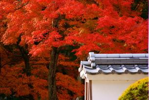 琴坂の紅葉の写真素材 [FYI00414905]