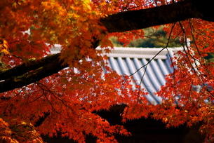 興聖寺琴坂の写真素材 [FYI00414923]