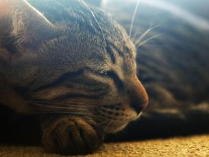 陽射しの中で眠る猫の写真素材 [FYI00414949]