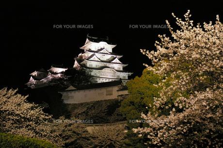 夜桜と姫路城の写真素材 [FYI00415165]