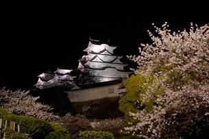夜桜と姫路城の写真素材 [FYI00415206]