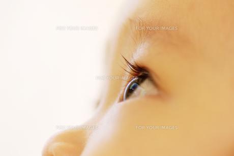 赤ちゃんの瞳の写真素材 [FYI00415412]