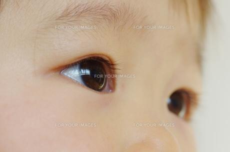 幼児の眼差しの写真素材 [FYI00415527]