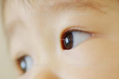 幼児の眼差しの写真素材 [FYI00415540]