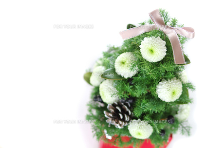 クリスマスツリーの写真素材 [FYI00415682]