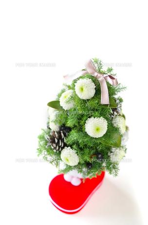 クリスマスツリーの写真素材 [FYI00415694]