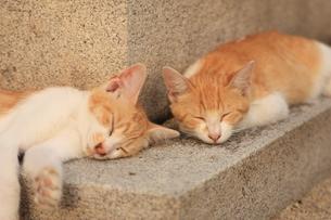 2匹の猫の写真素材 [FYI00415764]