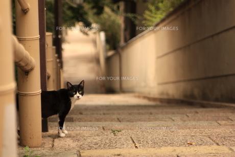 坂道の猫の写真素材 [FYI00415773]
