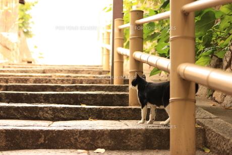 明日を見つめる猫の写真素材 [FYI00415774]
