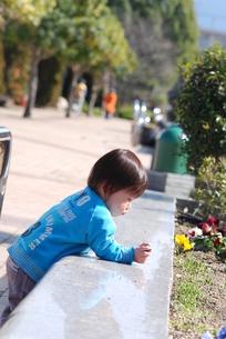 花壇のパンジーと遊ぶ子供の写真素材 [FYI00415789]