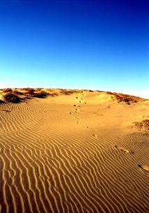 熱砂の素材 [FYI00415828]