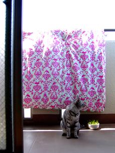 Life with CATの写真素材 [FYI00415855]