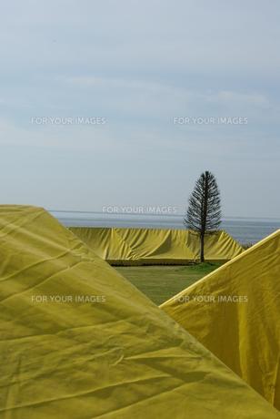 テントと木の写真素材 [FYI00415888]