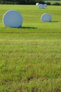 白い牧草ロールの写真素材 [FYI00415930]