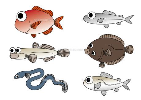 魚 素材の写真素材 [FYI00416014]