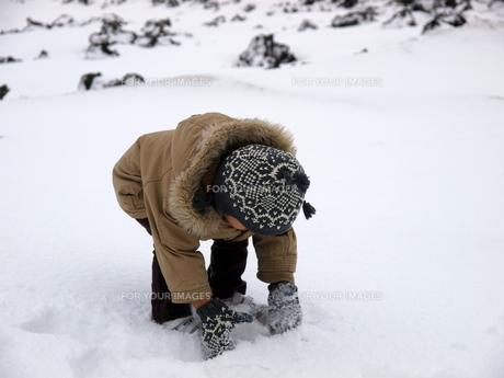 雪を拾う男の子の写真素材 [FYI00416026]