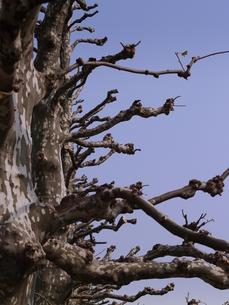 枝を横に伸ばす木の写真素材 [FYI00416079]