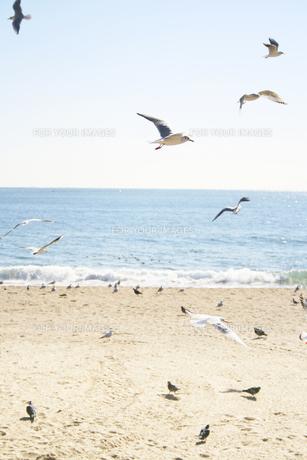 海とカモメの写真素材 [FYI00416103]