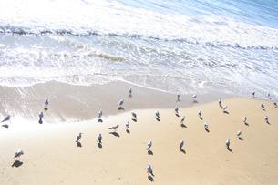 波とカモメの写真素材 [FYI00416108]