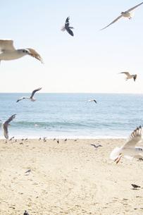 海とカモメの写真素材 [FYI00416127]