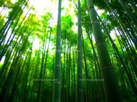 竹林の写真素材 [FYI00416136]