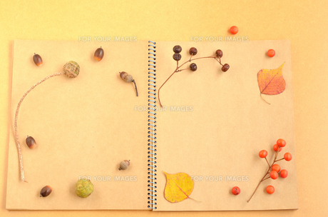 木の実のノートの素材 [FYI00416283]