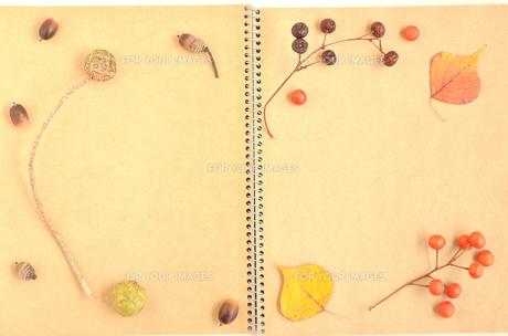 木の実のノート(フレーム)の素材 [FYI00416305]