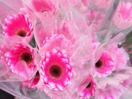 ピンクの花束の写真素材 [FYI00416353]