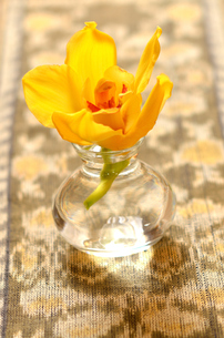 エスニックの敷物と黄色い蘭の写真素材 [FYI00416374]