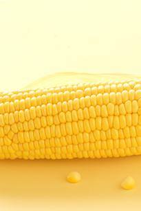 トウモロコシの写真素材 [FYI00416458]