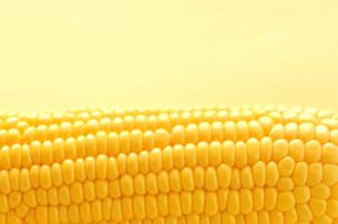 トウモロコシの写真素材 [FYI00416459]