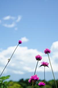 夏の高原の花の写真素材 [FYI00416570]
