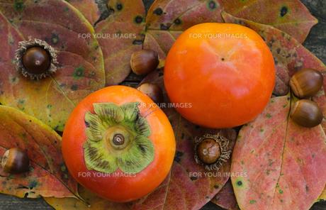 柿とドングリの素材 [FYI00416627]
