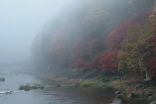 朝靄と紅葉の写真素材 [FYI00416847]