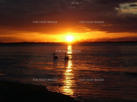 ペリカンと夕日の写真素材 [FYI00416939]
