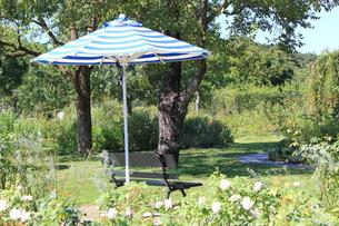 花畑のベンチで癒されるの写真素材 [FYI00417015]