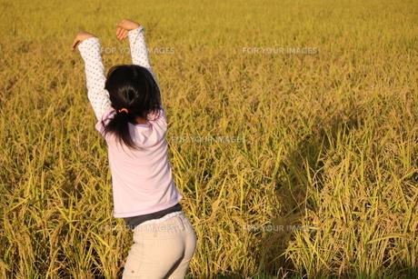 稲畑に映る影で遊ぶ女の子の写真素材 [FYI00417027]