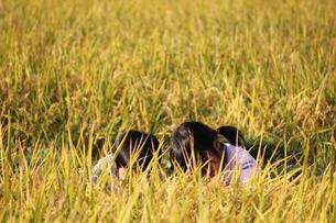 稲畑でかくれる子供達の写真素材 [FYI00417029]