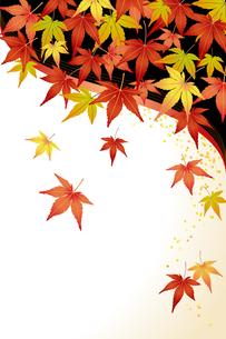 もみじ (maple leaves)の写真素材 [FYI00417037]