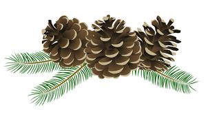 松かさ (conifer cone)の写真素材 [FYI00417041]