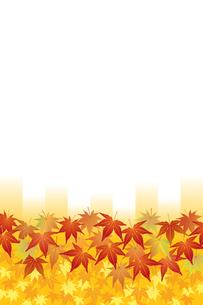 紅葉 (Maple Leaves: Red and Yellow)の写真素材 [FYI00417042]