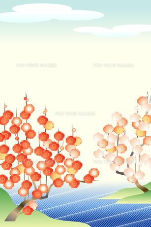紅白梅図(Japanese apricot: red and white)の素材 [FYI00417044]