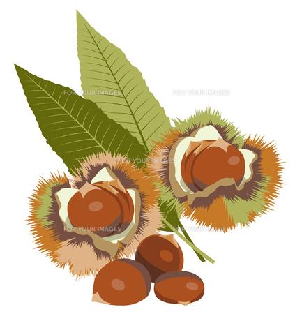 栗 (chestnut)の素材 [FYI00417045]