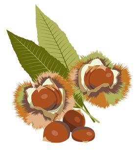 栗 (chestnut)の写真素材 [FYI00417045]