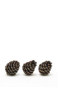 松かさ (conifer cone)の写真素材 [FYI00417049]