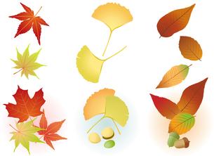 秋の葉(紅葉・銀杏・団栗): Fall Leaf(Maple,Ginkgo,Acorn)の写真素材 [FYI00417051]